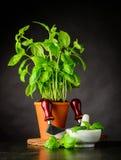 Basil Herb med Herb Chopper Royaltyfri Foto