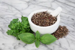 Basil Herb Varieties Stock Images