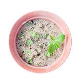 Basil hotchpotch. Basil in a hotchpotch isolated on white royalty free stock image