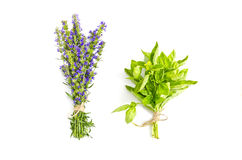 Basil and hyssop Royalty Free Stock Photo
