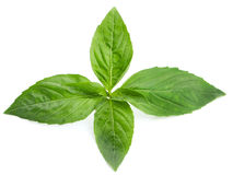 Basil isolated Stock Photo