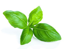 Free Basil Isolated Royalty Free Stock Images - 25888829