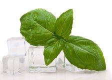 Basil isolated. Over white background Stock Image