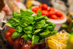 Basil for Italian dish Stock Image