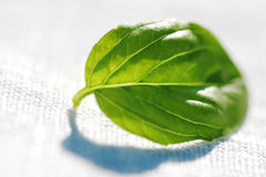 Basil leaf Royalty Free Stock Photo