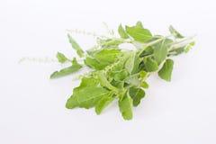 Basil Leaf Fotografía de archivo