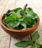 Basil Leaf stockfoto