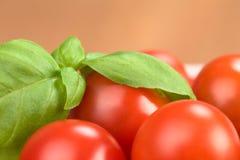 Basil Leaf on Cherry Tomato Royalty Free Stock Image