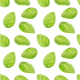 Basil leaf herb seamless pattern. Isolated on white background stock images