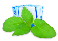 Basil leaf with ice Royalty Free Stock Image