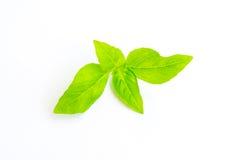 Basil leaf isolated Stock Photos