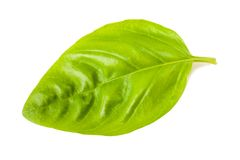 Basil leaf Royalty Free Stock Image