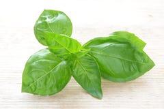 Basil leaf Royalty Free Stock Photos