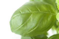 Basil Leaf Macro Royalty Free Stock Photos
