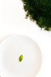 Basil leaf Stock Photography