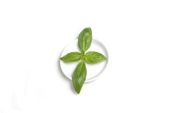 Basil leaf on plate Stock Photography