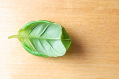 Basil Leaf on Wood Royalty Free Stock Images