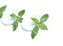 Basil leafs Stock Photo