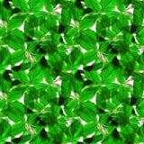 Basil Leafs Bezszwowy wzór Repeatably ręka Rysujący tło z pikantność basilem i ziele Obrazy Stock