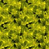 Basil Leafs Bezszwowy wzór Repeatably ręka Rysujący tło z pikantność basilem i ziele Obraz Stock