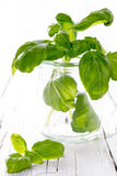Basil Leafs in a glass. On white wooden background Royalty Free Stock Photos