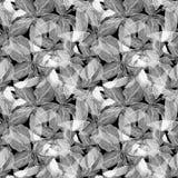Basil Leafs Seamless Pattern Fond tiré par la main de Repeatably avec l'herbe et le Basil d'épice Photos stock
