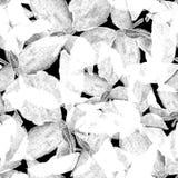Basil Leafs Seamless Pattern Fond tiré par la main de Repeatably avec l'herbe et le Basil d'épice Photographie stock libre de droits