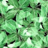 Basil Leafs Seamless Pattern Fond tiré par la main de Repeatably avec l'herbe et le Basil d'épice Images stock
