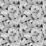 Basil Leafs Seamless Pattern Fundo tirado mão de Repeatably com erva e manjericão da especiaria fotografia de stock
