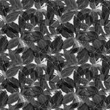 Basil Leafs Seamless Pattern Fundo tirado mão de Repeatably com erva e manjericão da especiaria imagens de stock