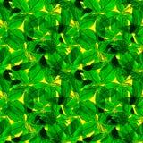 Basil Leafs Seamless Pattern Repeatably hand dragen bakgrund med kryddaörten och basilika Royaltyfri Bild