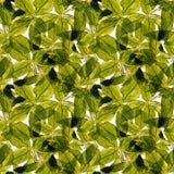 Basil Leafs Seamless Pattern Repeatably hand dragen bakgrund med kryddaörten och basilika Arkivfoton