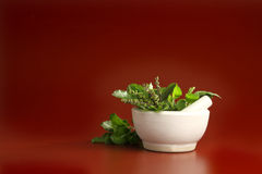 Free Basil Leaves Royalty Free Stock Images - 13897989