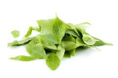 Basil leaves. Pile of fresh basil leaves on white background Stock Photo