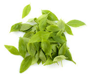 Basil leaves. Pile of fresh basil leaves on white background Royalty Free Stock Photography