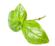 Basil leaves. Isolated on white Stock Photos