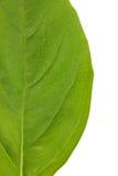 Basil Leaves Foto de Stock Royalty Free