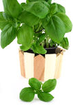 Basil leaves Royalty Free Stock Images