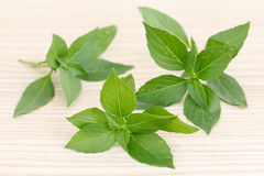 Basil Leaves Photos libres de droits