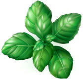 Basil Leaves illustration libre de droits
