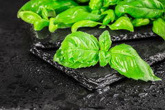 Basil leaves on a black slate Royalty Free Stock Photos