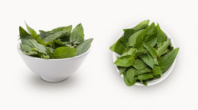 Basil leaves in a bowl Stock Photos