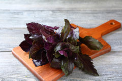 Basil leaves  on chopping board Stock Photo
