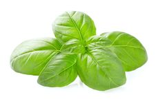 Basil leaves in closeup Royalty Free Stock Photography