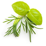 Basil leaves, dill herb, rosemary spice. Royalty Free Stock Image