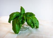 Basil Leaves em um copo de vidro no fundo branco Ervas saud?veis para cozinhar imagem de stock royalty free