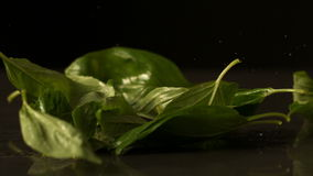 Basil leaves falling onto black surface stock footage