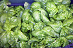 Basil leaves on a farm market Stock Image