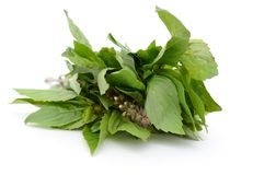 Basil leaves food Stock Images