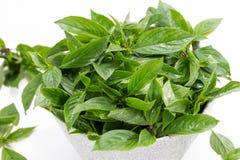 Basil Leaves Isolated in der Schüssel Lizenzfreie Stockfotos